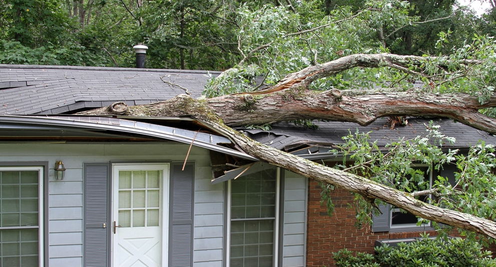 ProFloridian - Wind Damage Public Adjuster